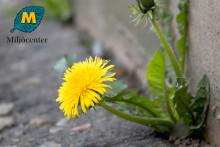 Miljöcenter stödjer uppropet mot glyfosater i våra trädgårdar