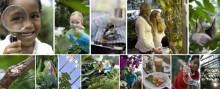Växthus i stan ett framtidsscenario