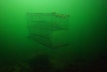 Torskfiske med grönlysande burar i sälrika vatten