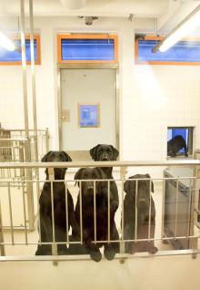 Djurrättsalliansen överlämnar över 80 000 namn för att rädda hundarna på Göteborgs universitet vid symbolisk manifestation