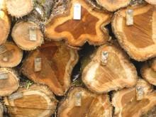 Goldpreis im Abschwung: Life Forestry setzt auf grüne Zukunftswährung