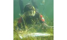 Dykare rengör snorklingsleden i Kollevik