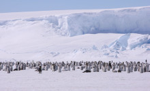 """Viktigt beslut: """"Skyddet i Antarktis kan leda till fler reservat i världshaven"""""""
