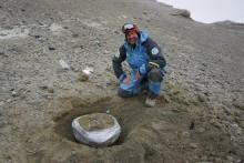Nya fynd visar Antarktis äldsta landlevande däggdjur
