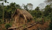 Alene i junglen i 22 år