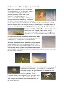 Information om områdets bottendjur