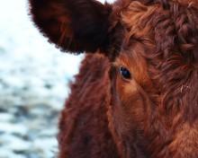 Boka in 21 november för årets djurskyddskonferens