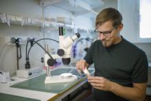 Mekanism som reglerar luktsinnet hos både insekter och människor upptäckt