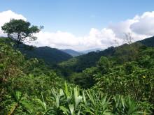 The Body Shop återplanterar 14.5 miljoner kvm regnskog i Vietnam