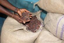 Mondelēz International bude mít do roku 2025 kakao pro všechny své čokoládové značky výhradně z programu Cocoa Life