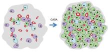 Ny substans som kan stimulera insulinproduktion prövas i studie på Akademiska