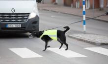 Många hundar skadas i trafikolyckor