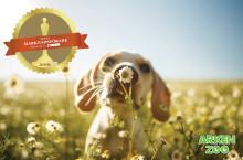 Arken Zoo nominerade till Årets Marknadsförare