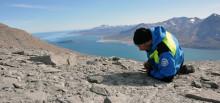 Grönländska fossil skildrar global återhämtning av ekosystem efter massutdöende
