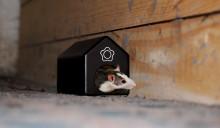 Nå trekker musene inn – slik kan du sikre deg