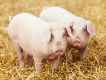 Orkla Foods Sverige välkomnar ny EU-lag om djurhälsa och antibiotika