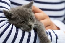Läkemedelsförgiftning hos katt