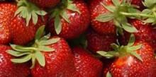 Bärintresset ger nytt hopp för svensk odling