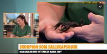 Skorpion till husdjur