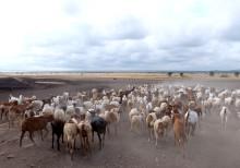 UN: Tierschutz in der Entwicklungspolitik weiterhin kein Thema