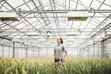 Lantmännen och LRF välkomnar regeringens satsning på svensk växtförädling