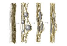 Skelettimitation visar hur ben bildas atom för atom