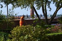 Arkeologisk förundersökning i Rosenträdgården