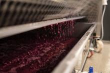 Pressning  – utvinner det sista ur de smakrika druvskalen