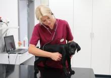 Ny europeisk specialist i kardiologi på Universitetsdjursjukhusets smådjursklinik