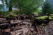 Ja til ny skovlov for naturens skyld