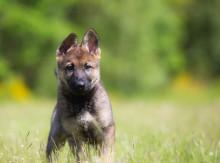 Faror för våra hundar i naturen