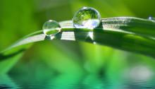 Ledande på marknaden för klimatåtgärder: Eden Springs hjälper tusentals europeiska kunder att vidta åtgärder mot klimatförändringarna genom sitt CarbonNeutral®-program.
