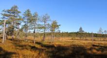 Pressmeddelande: Dalarna har fått tre nya naturreservat