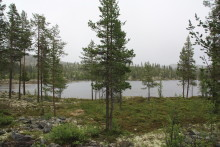 Statskog gjennomfører i perioden 2011-2017 et omfattende salg av spredte skogeiendommer