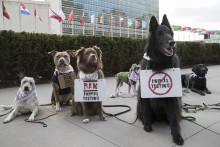 Koiraprotesti New Yorkissa kosmetiikan eläinkokeita vastaan