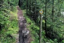 Utmana dig själv i Skogsmaran