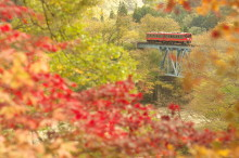Recommended Fall Color Locations Close to Tokyo for Enjoying Short Trip