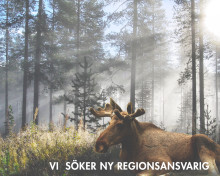 Nyfiken på arbetshandskar? Soft Touch AB söker regionsansvarig för distriktet Norra Sverige!