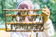 Det där att bin skulle vara aggressiva, det stämmer inte