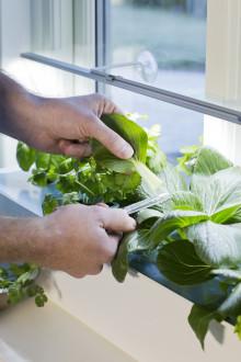 Nu kan fler odla mer - Harvy i butik fr.o.m. vecka 8