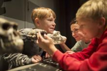Varför reser sig håret på Naturhistoriska riksmuseet?