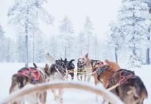 HUNDraprocentig naturnära transfer från nya Scandinavian Mountains Airport till SkiStars skidområden i Sälen