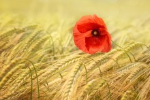 Till 100-årsminnet av första världskrigets fred