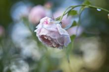 Haveselskabet udskriver fotokonkurrence: Har du taget Danmarks flotteste havefoto?