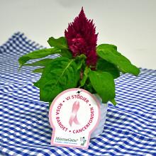 Dagens Rosa Produkt 9 oktober - en Plymört från Mäster Grön