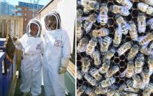 Bi på taket ger honung med smak av Malmö
