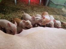 NRK-film viser dyrevelferdsbrudd