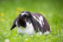 Så utfodrar du kaninen rätt