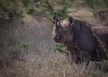 EU-parlamentet måste agera för att stoppa den illegala handeln med vilda djur och växter