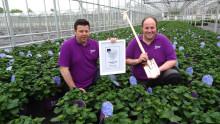 Hortensia-akuten – holländska experten ger 14 tips på hur du räddar din trädgårdshortensia ur diverse situationer
